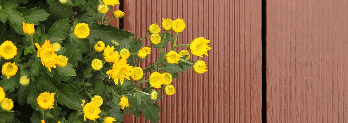 Braune Dielen mit Blumen