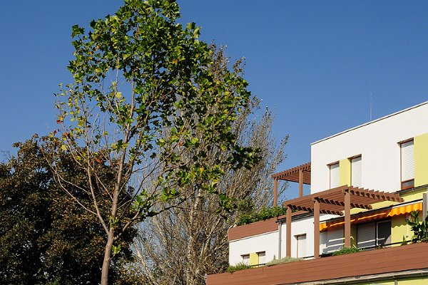 mehrstufige Terrasse (2)
